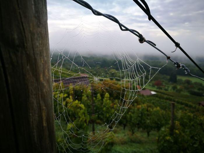 Spider Web Drop