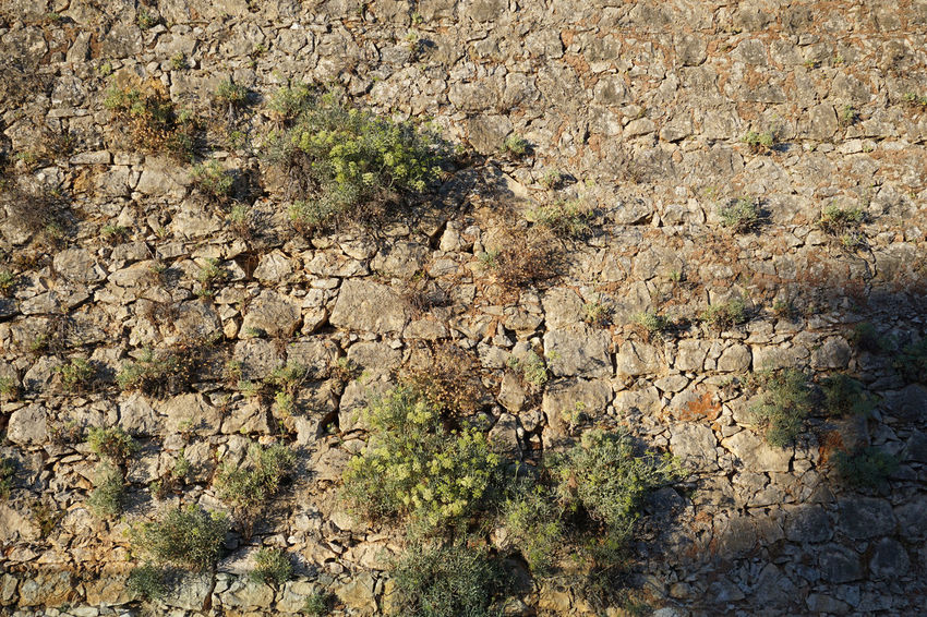 Stone wall with vegetation. Wall Arid Climate Backgrounds Beauty In Nature Close-up Day Full Frame Grass Growth Nature No People Outdoors Physical Geography Plant Rock - Object Rock Face Scenics Textured  Tree Wall - Building Feature