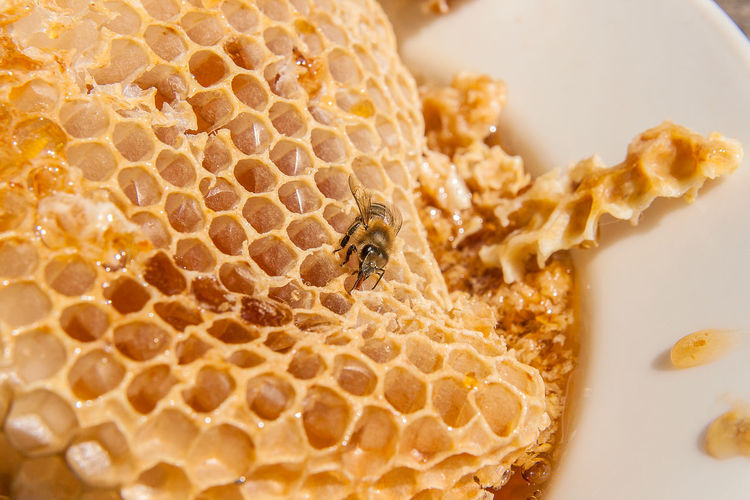 Animal Animal Themes Animal Wildlife Animals In The Wild APIculture Bee Close-up Food Food And Drink Freshness High Angle View Honey Honeycomb Indoors  Insect Invertebrate No People One Animal Snack Still Life Table