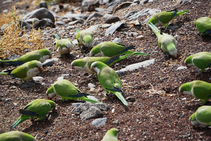 green biords2 Fuerteventura Close-up Day Food Green Birds Green Color Growth Leaf Nature No People Outdoors Plant