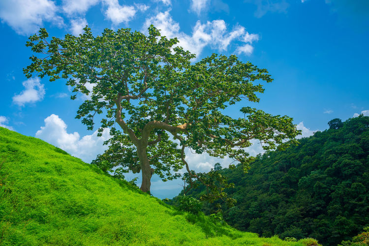 Beauty In Nature Blue Cloud - Sky Day Environment Green Color Growth Idyllic Land Low Angle View Nature No People Non-urban Scene Outdoors Plant Scenics - Nature Sky Tranquil Scene Tranquility Tree