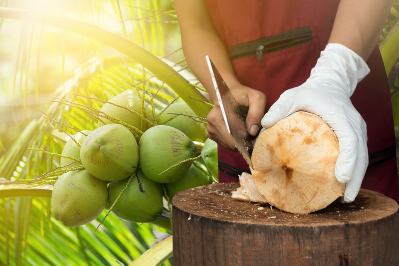 Midsection Of Man Cutting Coconut On Wooden Log