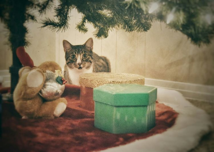 Portrait of cat by christmas tree