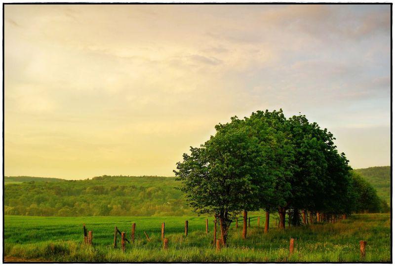 field in the evening light Colors Sundowner Beauty In Nature Cloud - Sky Field Lawoe Lawoe Nature No People Outdoors Sky Tree