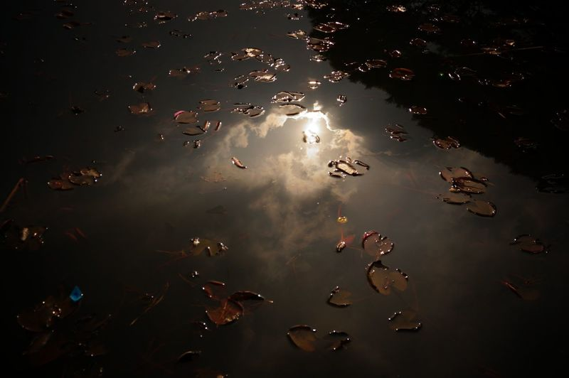 High Angle View Of Fallen Leaves Floating With Reflection In Lake