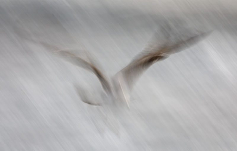 Full frame shot of bird flying