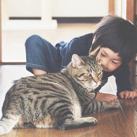 「金ちゃーん、ちゅーしてあげるねー♡」といいながら、チュウ♡ . 金太郎のことを愛してやまない息子、というか両想いなふたり。笑 二人の絡みにはいつも癒されています...♡ . そんな息子は、昼から発熱中😳 明日には元気になってるといいな♡ . . 暖かくしておやすみなさい...✡✡✡ 猫とこども にゃんこ にゃんだふるらいふ Ig_neko cat_stagramnekostagramig_cat animals_ world_kawaii_catig_kids ig_kidsphoto childrenboyこどもきんたかんたvscocam仲良し猫さんとの生活幸せ
