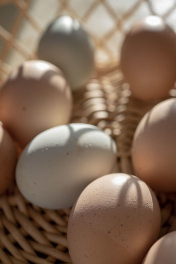 basket with brown and bluish color eggs from local farmer's market Blue Eggs EGGS IN BASKET Basket Basket Of Eggs Brown Egg Brown Eggs Brown Eggshell Close-up Container Egg Eggs Eggs Close Up Food Food And Drink Fresh Eggs Freshness Indoors  Light And Shadows No People Still Life