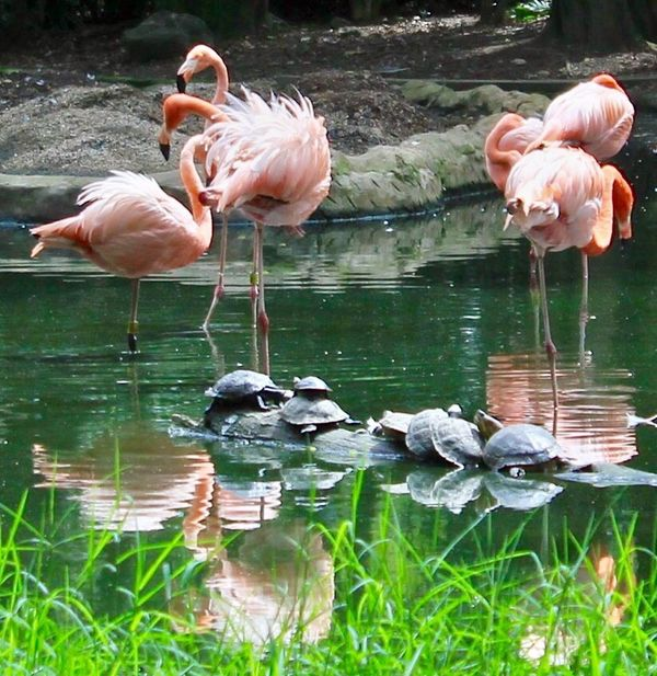Water Flamingo Animal Themes Nature No People Adapted To The City Tortoise