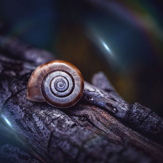 Little snail on the trunk in the nature in autumn season