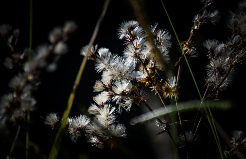 EyeEmNewHere Close-up Nature Plant Flower Growth No People Outdoors Fragility Beauty In Nature Freshness Day Hello World Popular Photos Simanovic Tvminuto Popular Farm Life Beauty In Nature Reflection Welcome To Black