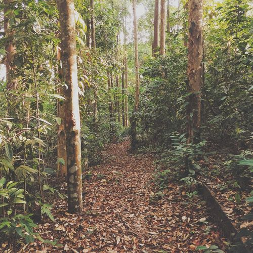 Welcome to the Jungle with Vscocam