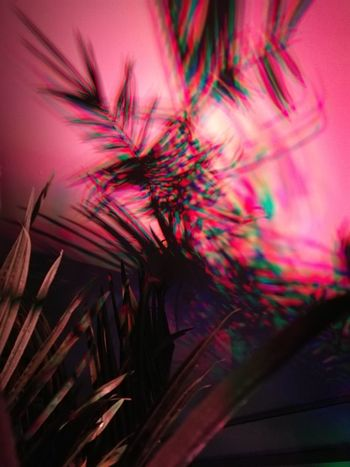 Party Multi Colored Palm Tree Light Show Clubbing Carribbean Leafs Pink Color Shaddows Mezmerizing HUAWEI Photo Award: After Dark