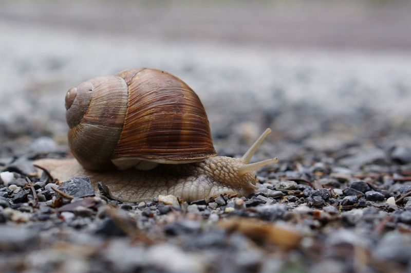 Close-up of snail outdoors
