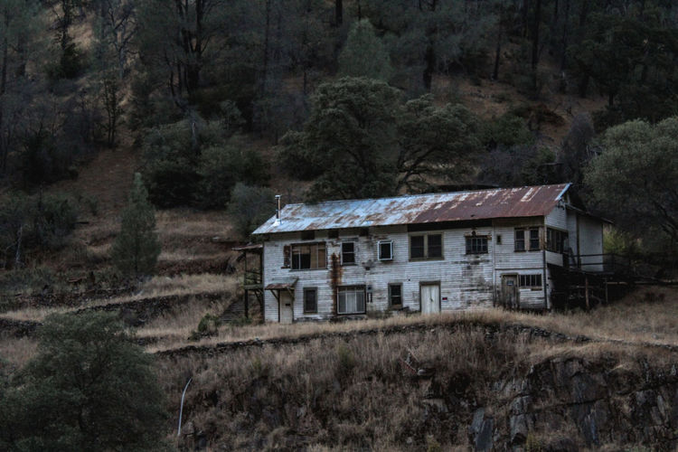Abandoned house on field by trees in forest