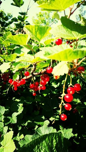Berries :-) Enjoying Life Berries Summer Nature