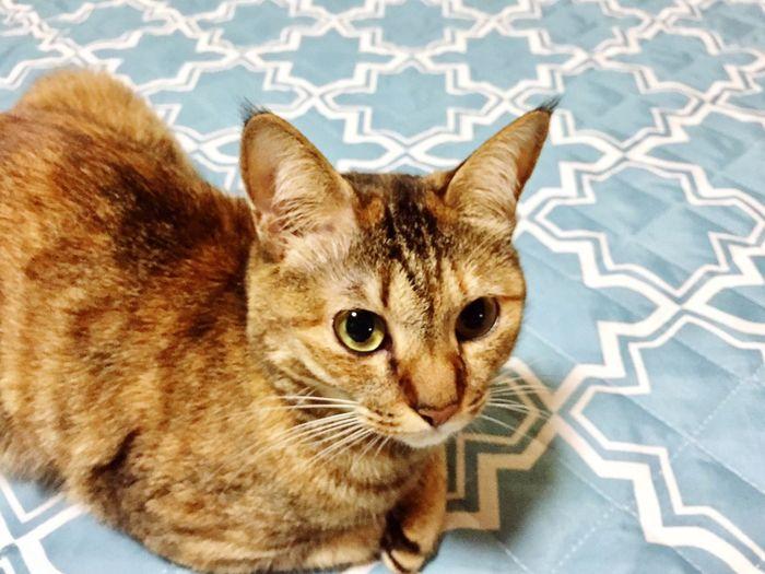 Cat Cat♡ Mycat♥ Mycat❤ Mycat 猫 ねこ にゃんこ