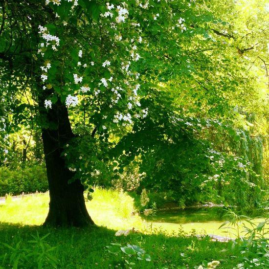 TreePorn WeAreJuxt.com EyeEm Best Edits Nature_collection