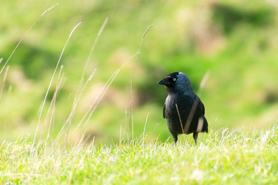 Birds Birdwatching Animals Eye4nature Wildlife