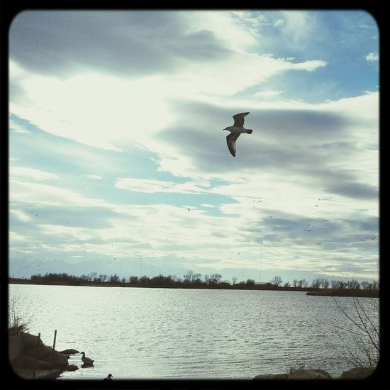 Enjoying the cool windy day. Clouds And Sky Seagull Lake