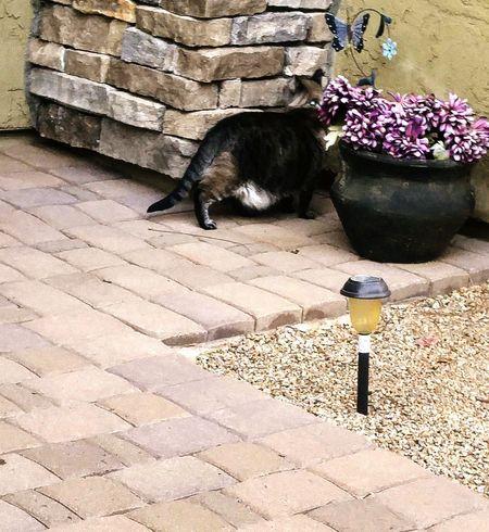 Curiosity Eyemcatlover😻 EyeEmNewHere Eyemcat Cat Animal Themes One Animal Domestic Cat Pets Domestic Animals Day Outdoors Building Exterior No People Mammal