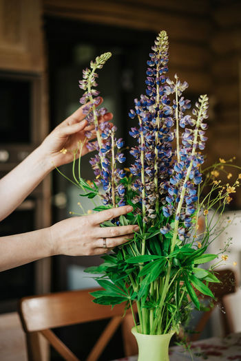 Cropped hand arranging flowers in vase