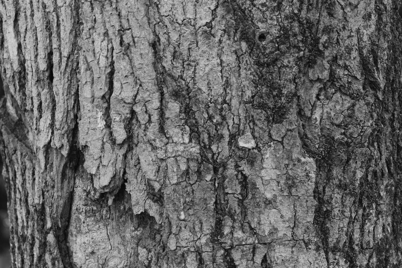 FULL FRAME SHOT OF TREE TRUNKS