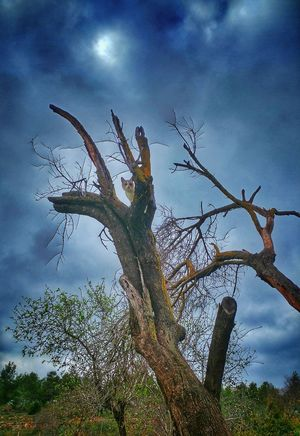 A cat on a tree Shades Of Winter Tree Sky Cloud - Sky Low Angle View Nature Outdoors No People