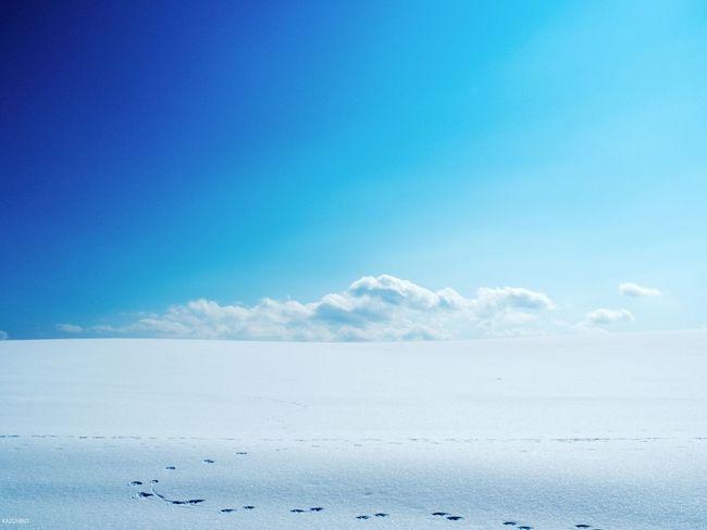 Japan Hokkaido 雪原
