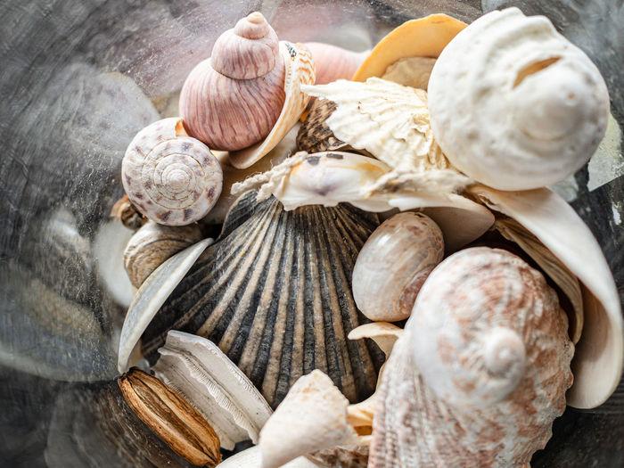 High angle view of a jar of seashells