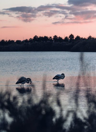 Flamingos EyeEm Ready   EyeEmNewHere Canon Day Tranquility Outdoors Animal Wildlife Scenics Silhouette No People Sky Beauty In Nature Animal Themes Water Nature Lake Animals In The Wild Bird Sunset Flamingo