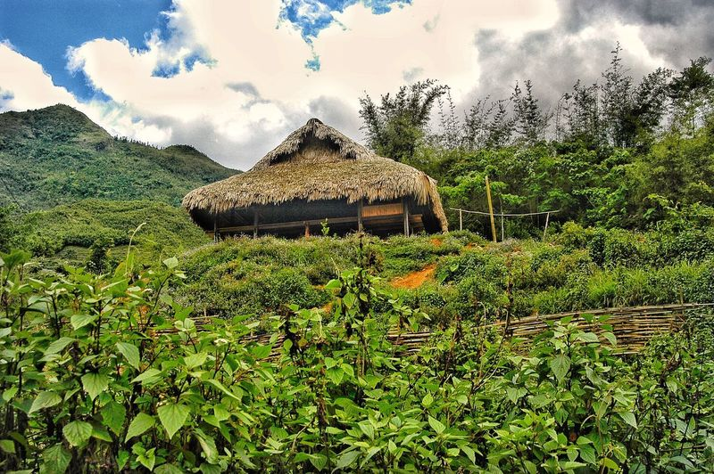 Vietnam sapa EyeEm Selects Discovery Popular Photos Popular Plant Sky Green Color Cloud - Sky Nature Tree No People Growth Architecture Built Structure Day Roof Field Beauty In Nature Land Grass Building Exterior Sunlight Landscape Outdoors