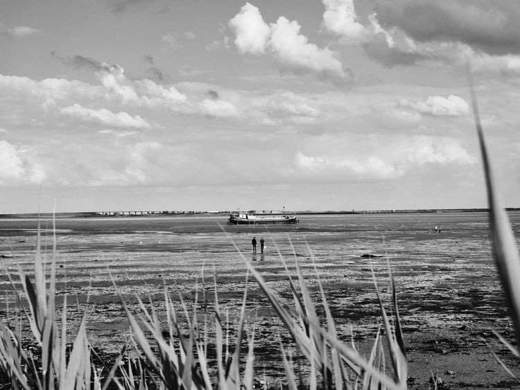 Black & White Black And White Photography Cloud - Sky Beach Sea Nature Outdoors Day Sky Scenics Tranquility Cereal Plant Rural Scene Water Sand No People Tire Track Landscape Horizon Over Water Nature Photography Monochrome Monochrome Photography Monochrome_life Monochrome Collection Beauty In Nature EyeEm Selects