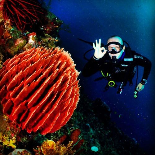 Diving Divetrip Liquiddive Tulamben northbali bali sea indonesia instadonesia instanusantara underwater photography scuba scubadiving followme