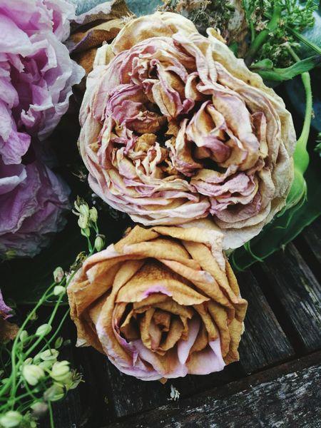 Romantisk Blomster Flower Photography Roses Nature Summer Flowers Sommer Romantic Decay Flowerporn Decaying Dansk Natur