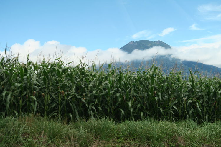 niseko hokkaido japan Agriculture Grass Hokkaido Niseko Tree Yotei Mt. Yotei Mt., Hokkaido Blue Sky Cloud And Sky Mountain Outdoors Yotei EyeEmNewHere Capture Tomorrow Moments Of Happiness It's About The Journey 2018 In One Photograph