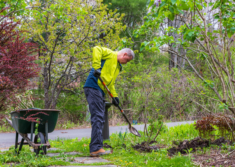 Side view of man working in forest