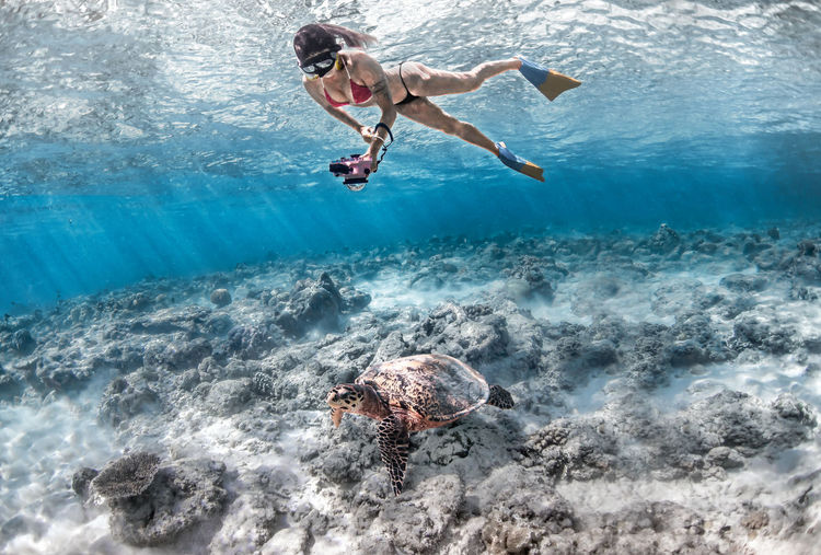 Full length of woman photographing turtle in sea