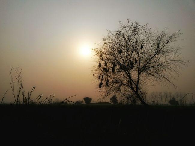 Shadows & Lights Natute Farms Tree Bird Nests Sunlight