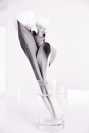 Monochrome Tulip Vase Deceptively Simple Flower Showing Imperfection überbelichtet