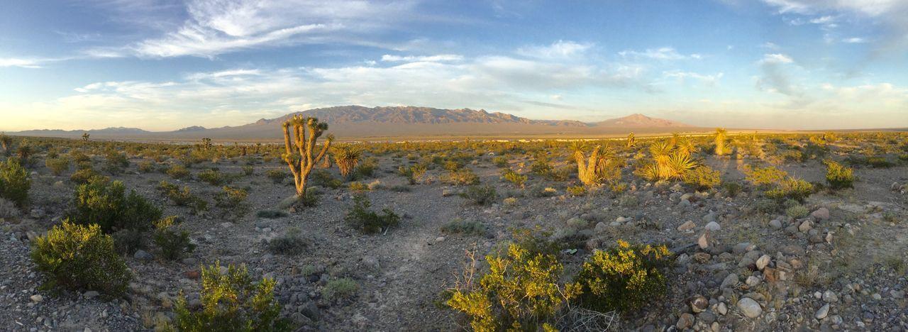 Nevada desert outside Las Vegas Moapa Desert Desert Cactus Travel Photography Taking Photos Eyem Best Shot - My World Eyemphotos Landscape Photography Las Vegas NV Panorama Ipadphotography