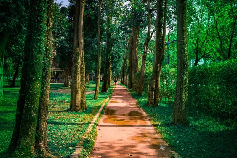 Walkway Amidst Trees