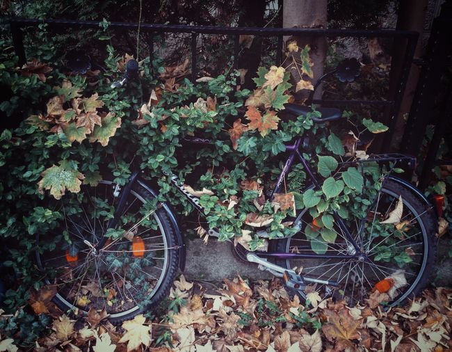 Leaf Growth No People Abandoned Plant Outdoors Day Transportation Bike Bicycle
