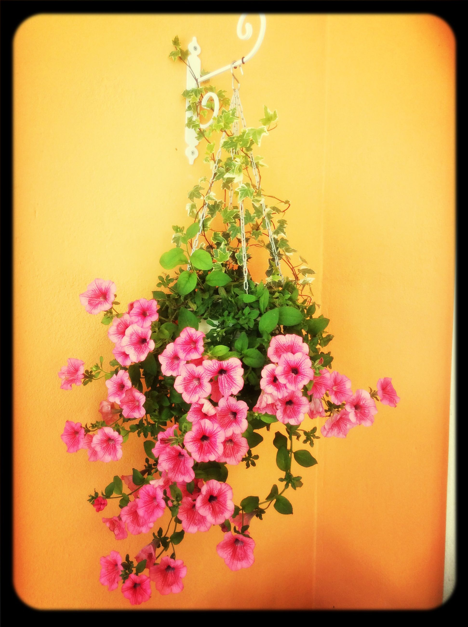 flower, transfer print, freshness, fragility, auto post production filter, petal, growth, indoors, plant, beauty in nature, wall - building feature, potted plant, flower head, nature, vase, bunch of flowers, pink color, blooming, in bloom, wall