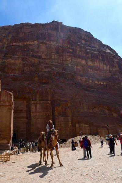Jordan Jordan Middle East Petra Petra, Jordan Adventure Camel Desert Jordans Nature Real People Rock - Object Sunlight Travel Destinations Working Animal