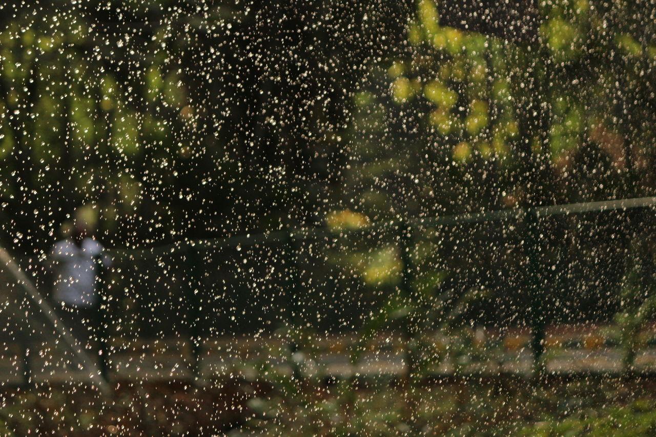 rain, wet, rainy season, drop, weather, raindrop, water, motion, night, no people, window, nature, outdoors, focus on foreground, snowing, snowflake, tree, illuminated, defocused, beauty in nature, close-up
