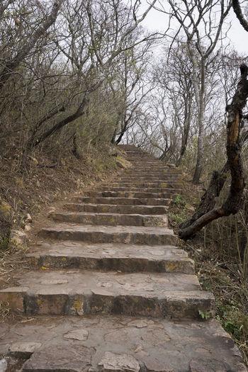 Barren Climbing Hike Mountainside Path Rough Stairs Stairway Steep Stone Trees Uphill Upward Upwards Winding