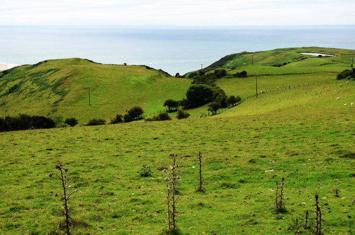 hills hear Aberdovey Landscape Environment Green Color Plant Scenics - Nature Tranquil Scene Beauty In Nature Tranquility Land Field Grass No People Nature Sky Day Mammal Agriculture Growth Rural Scene Livestock Outdoors Wales UK Aberdovey Pasture Sea