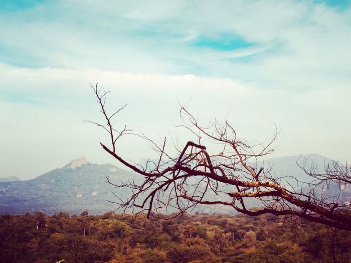 Nature Tranquility Sky Landscape Beauty In Nature Bare Tree Mountain Outdoors Tranquil Scene No People Day Lone Scenics Branch Tree