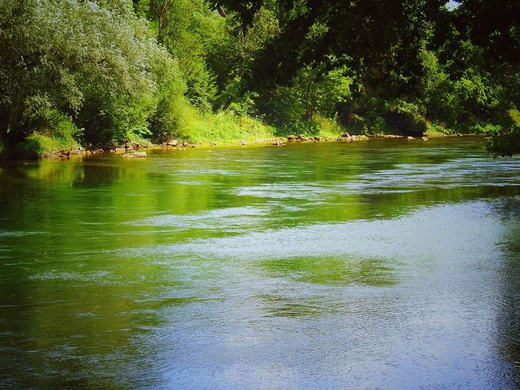Vrbas river River Riverside River View Riverbank Rivers Riverside Photography Vrbas Water Nature Tranquil Scene Green
